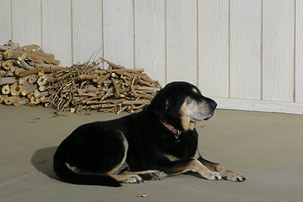 Keoki and Woodpile: Still Life, With Dog